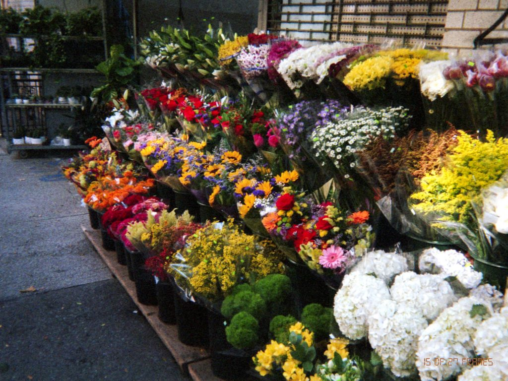 Matt's third photo of flowers in NYC.