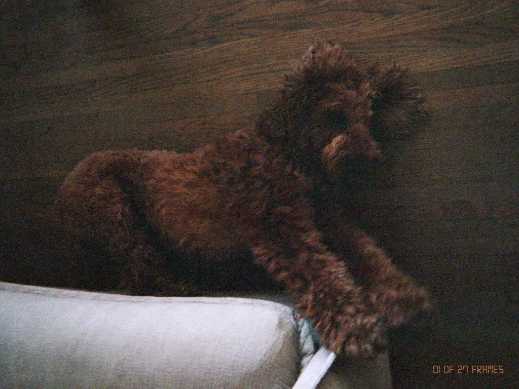 Neada Deters Dog
