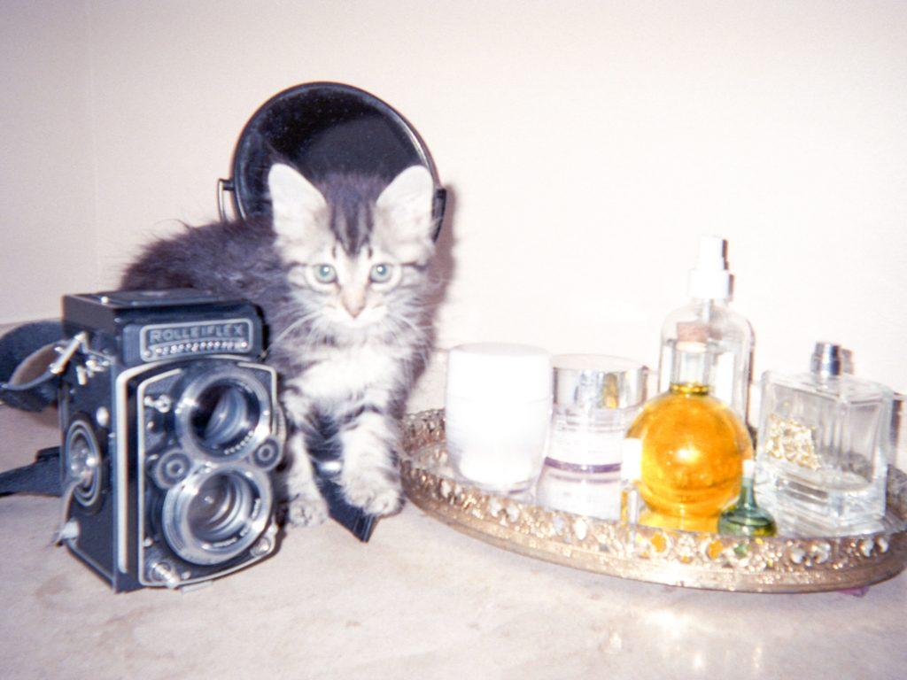 Allister Ann kitten x and repeat mental health